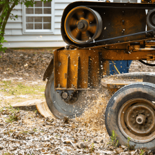 St.-Cloud-Stump-Grinding-Removal.png