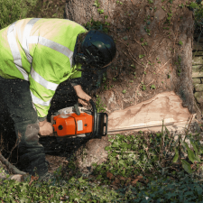 Tree-Removal-Attention-to-Detail-Stearns-County-MN.png