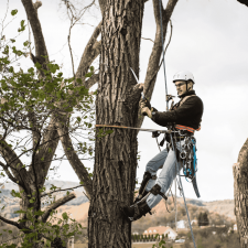 Tree-Removal-Safety-Decatur.png