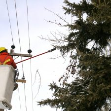 Tree trimming near power lines Greenville County